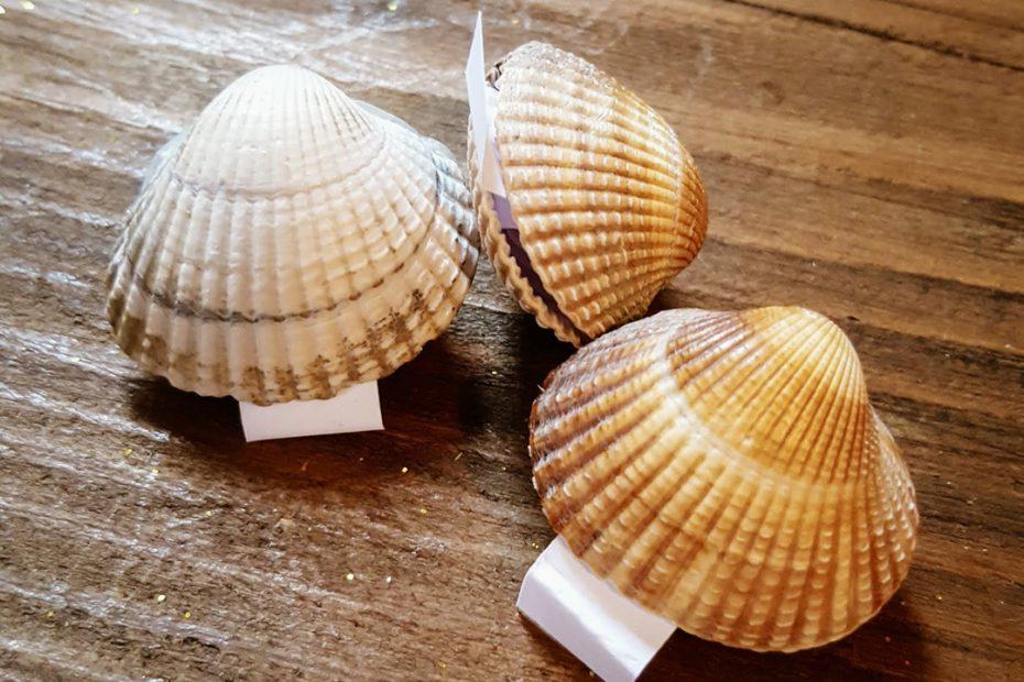 Fortunes coquilles coquillages contenant un message surprise à découvrir