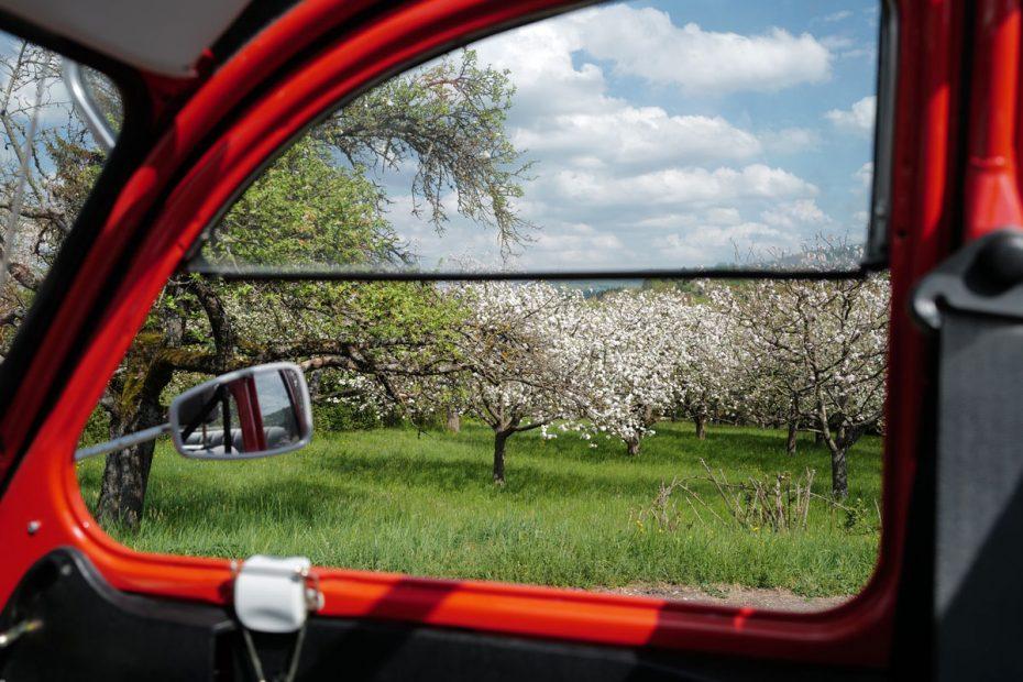 allées de pommiers à travers la fenetre d'une voiture ancienne rouge
